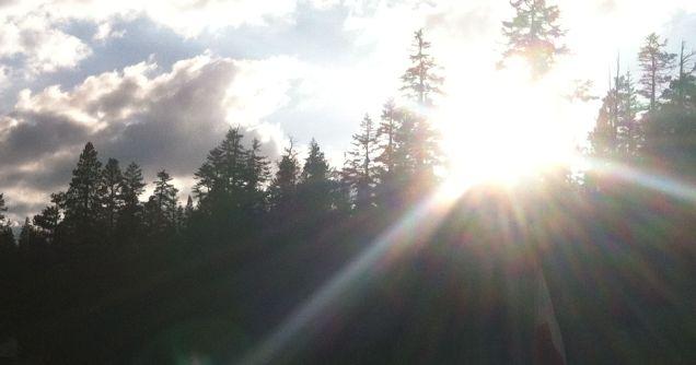 Sun Over Trees