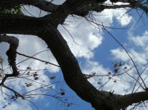 Clouds through Branches