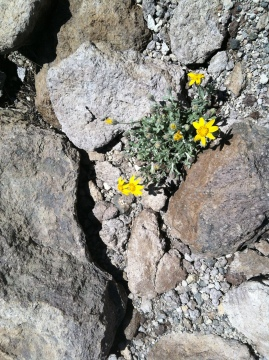 Wildflower Among Rocks