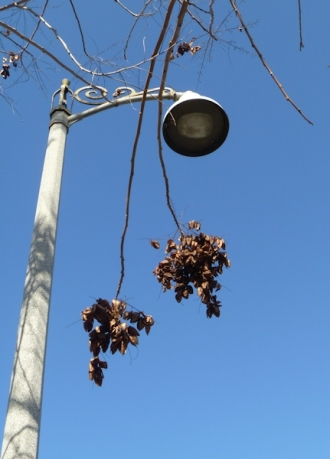 201501_Blue_Sky_Lamp_Post