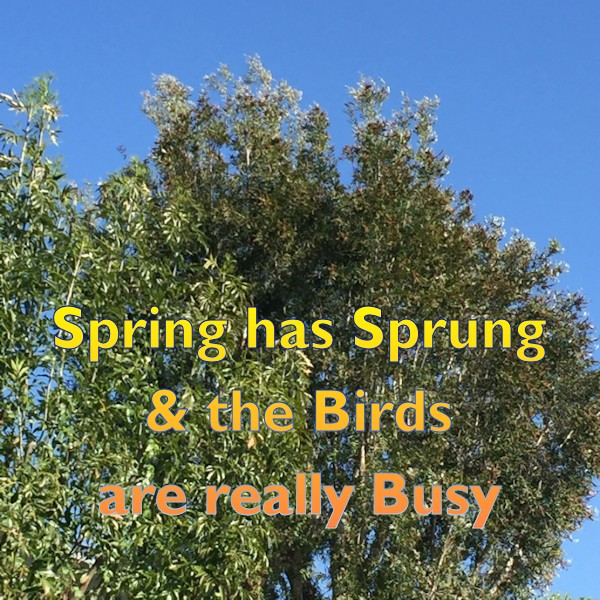Spring has Sprung and the Birds are really Busy