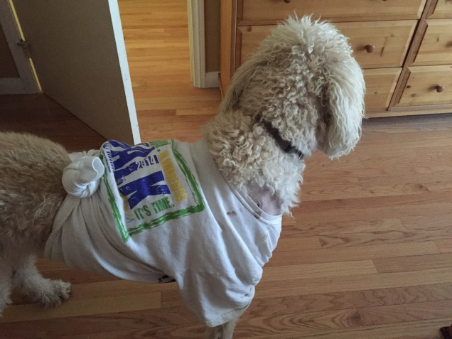 Thumper the labradoodle in NAMI Walks t-shirt with wound showing