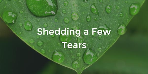 tears-on-plant