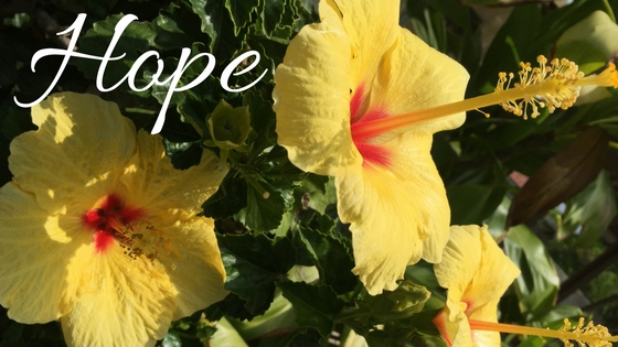 Hope - yellow hibiscus background